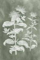 Sage Impressions III Fine-Art Print