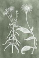 Sage Impressions IV Fine-Art Print