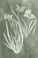 Sage Impressions VI Fine-Art Print