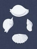 Coquillages Blancs I Fine-Art Print