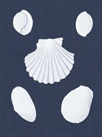 Coquillages Blancs III Fine-Art Print