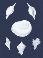 Coquillages Blancs IV Fine-Art Print