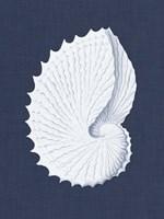 Coquillages Blancs V Fine-Art Print
