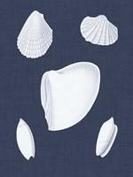 Coquillages Blancs VI Fine-Art Print