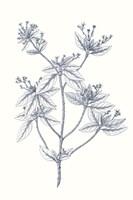 Indigo Botany Study III Fine-Art Print