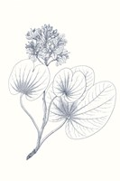 Indigo Botany Study IV Fine-Art Print