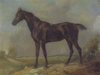 Golding Constable's Black Riding-Horse Fine-Art Print