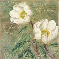 White Christmas Roses Fine-Art Print