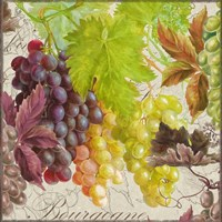 Vintage Fruits II Grapes Fine-Art Print
