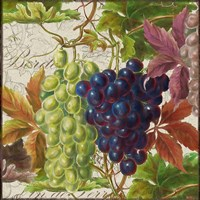 Vintage Fruits III Grapes Fine-Art Print