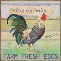 Egg Farm Rooster Fine-Art Print