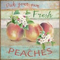 Farmers Market Peaches Fine-Art Print