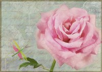 Pink Rose With Grasshopper I Fine-Art Print