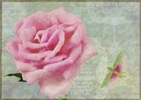 Pink Rose With Grasshopper II Fine-Art Print