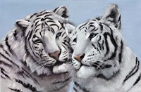 Loving White Tigers Fine-Art Print