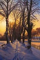 Snowy Evening Fine-Art Print