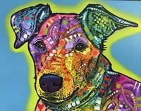 Shamus Fine-Art Print