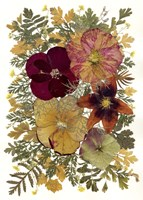 Dried Flowers 23 Fine-Art Print
