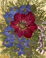 Dried Flowers 24 Fine-Art Print