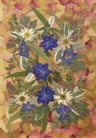 Dried Flowers 25 Fine-Art Print