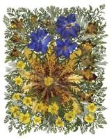 Dried Flowers 26 Fine-Art Print