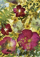 Dried Flowers 28 Fine-Art Print