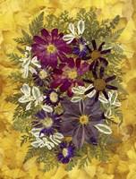 Dried Flowers 36 Fine-Art Print