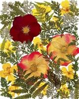 Dried Flowers 38 Fine-Art Print