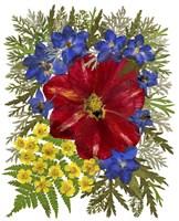 Dried Flowers 41 Fine-Art Print