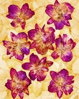 Dried Flowers 44 Fine-Art Print