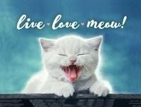 Live Love Meow Fine-Art Print