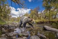 Grizzly Bear Creek Fine-Art Print