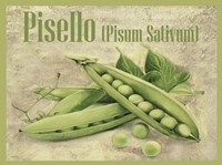 Pisello Pisum Sativum Fine-Art Print