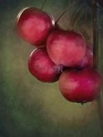 Berries 1 Fine-Art Print