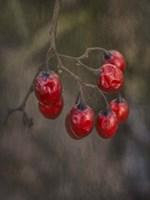 Berries 2 Fine-Art Print