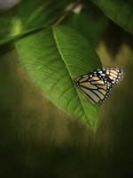 Butterfly Leaf Fine-Art Print