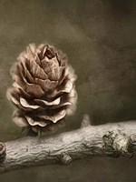 Pinecone Fine-Art Print