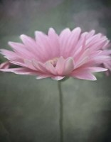 Pink Bloom 1 Fine-Art Print