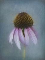 Pink Petals Fine-Art Print