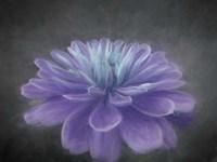 Purple Passion Fine-Art Print