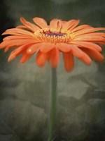 Tangerine Fine-Art Print