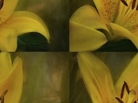 Lily Abstract Fine-Art Print