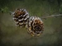 2 Pinecones Fine-Art Print