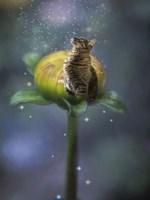 Fantasy Cat Fine-Art Print