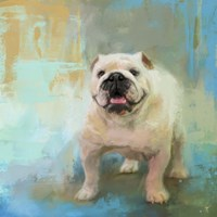 White English Bulldog Fine-Art Print