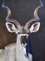Greater Kudu Fine-Art Print
