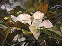 Magnolia Bloom 3 Fine-Art Print