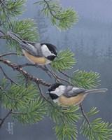 Pine Tree Chatter Fine-Art Print