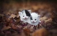Kitten Twins Fine-Art Print
