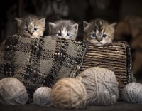 Kittens In A Basket Fine-Art Print